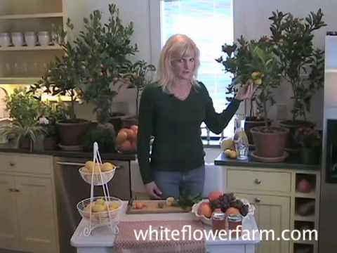 How to Grow Citrus Plants