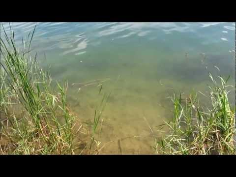 Slip Bobber Fishing at Spring Mill Pond – Video #1
