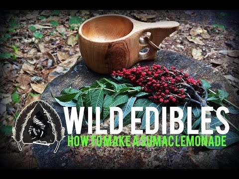 Wild Edibles-How to Make Sumac Lemonade