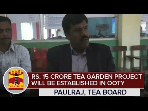 Rs-15-Crore-Tea-Garden-Project-will-be-established-in-Ooty-Paulraj-South-Indian-Tea-Board