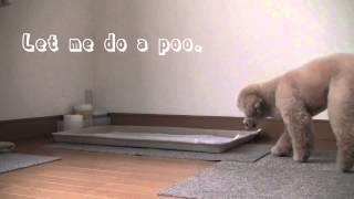 Dog Training 6