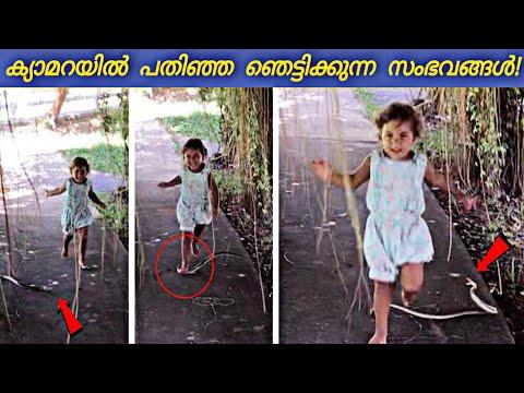 പാമ്പ് കുട്ടിയുടെ മുന്നിൽ വന്നപ്പോൾ!😰 ക്യാമറയിൽ പതിഞ്ഞ സംഭവങ്ങൾ   Malayalam   Razin Visuals