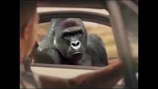 Nonton Harambe Fast & Furious 7 vine Film Subtitle Indonesia Streaming Movie Download