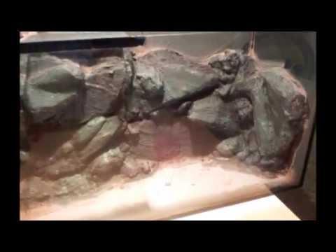 3D Rückwand, und Modulbau für Aqaurien