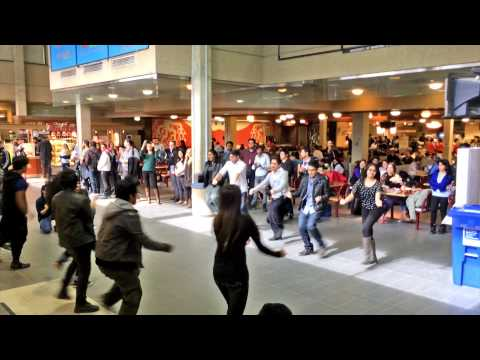 ICC World t20 Bangladesh 2014 Flash Mob – University of Manitoba@Winnipeg