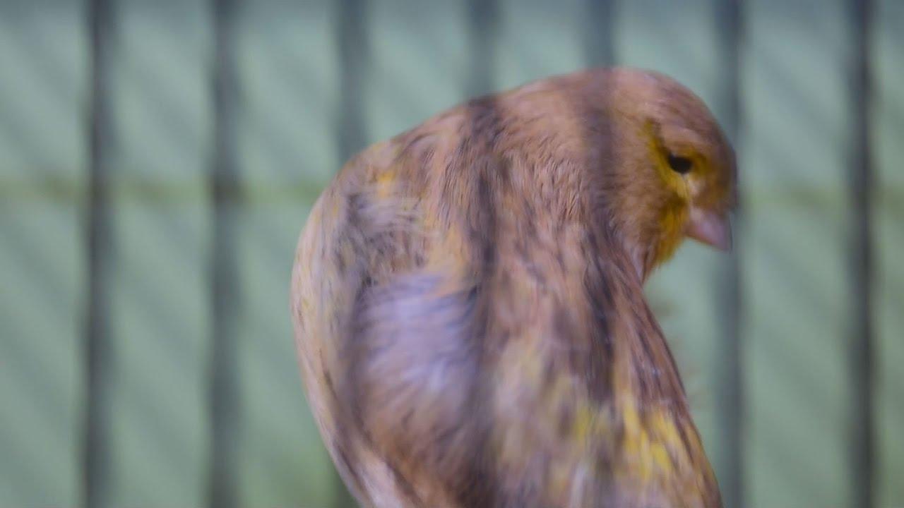 """Διαγωνισμός """"πτηνών συντροφιάς"""" στο Άργος"""