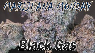 Black Gas Marijuana Monday by Urban Grower