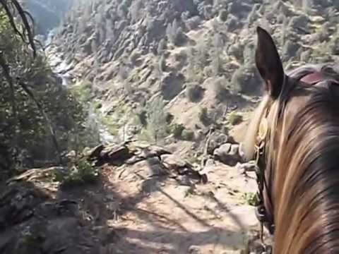 Trail Ride-Rocky Mountain Horse-Solo Training