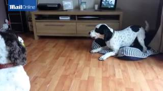 Sharing is caring! Naughty dog won't share tennis ball with poochy pal.Sharing is caring! Naughty dog won't share tennis ball with poochy pal.Sharing is caring! Naughty dog won't share tennis ball with poochy pal.Naughty dog won't share tennis ball with...Naughty dog won't share tennis ball with...Naughty dog won't share tennis ball with...