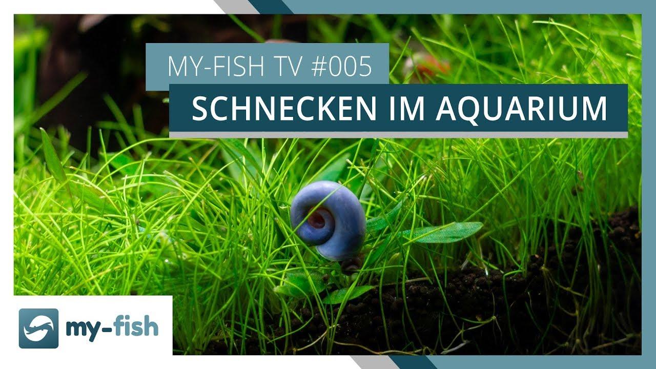 my-fish TV - Deine Nr. 1 Anlaufstelle für alle Themen rund um die Aquaristik 59