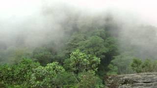 "Un ""time lapse"" de un bosque de niebla en el parque natural Chicaque, a 30 min de Bogotá, Colombia, 2000-2700 m de altura."