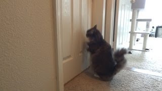 Cat struggles to open door