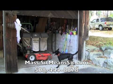 Sit Means Sit – Massachusetts – Dog Obedience Training