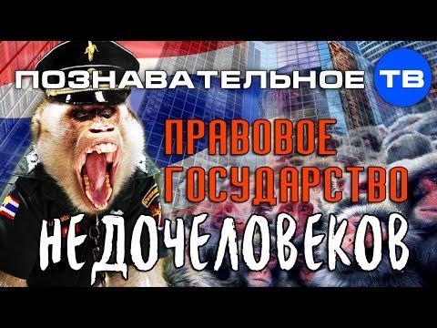 Правовое государство недочеловеков (Познавательное ТВ, Валентин Катасонов)