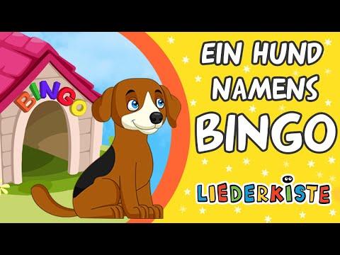 Bingo - Kinderlieder zum Mitsingen   Liederkiste