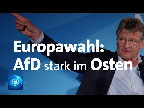 AfD: In Brandenburg und Sachsen stärkste Kraft bei de ...