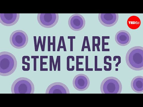 stem - View full lesson: http://ed.ted.com/lessons/what-are-stem-cells-craig-a-kohn Is personalized medicine for individual bodies in our future? Possibly -- with t...