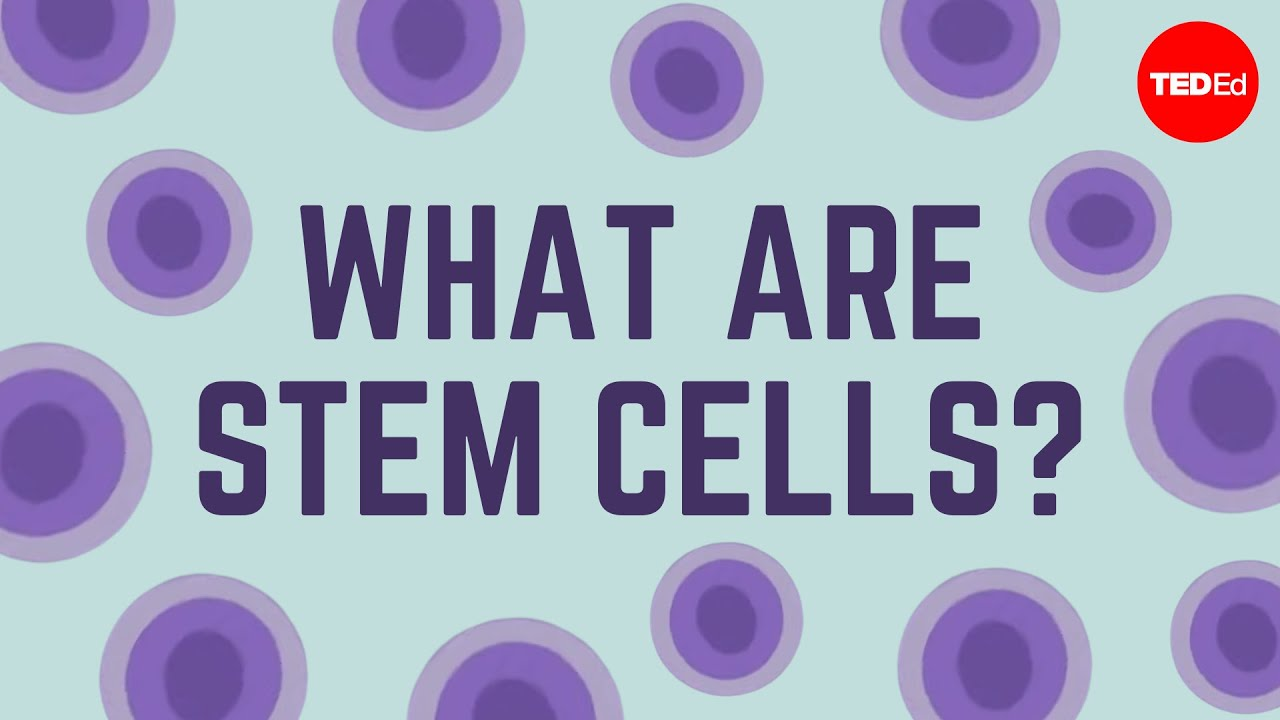 Video: What are stem cells?