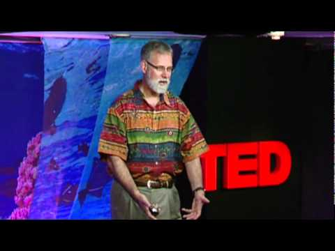 ocean acidification - http://www.ted.com Rob Dunbar hunts for data on our climate from 12000 years ago, finding clues inside ancient seabeds and corals. His work is vital in sett...