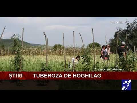 Tuberoza de Hoghilag va fi prima floare din România protejată la nivel european
