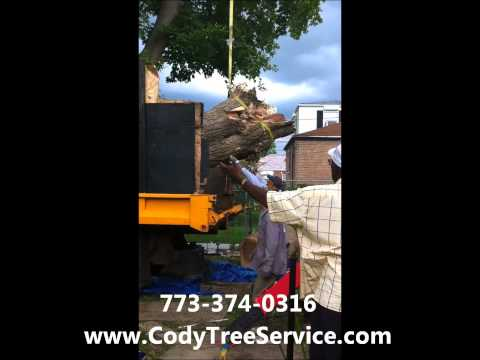 Cody Professional Tree & Stump Removal Service Chicago