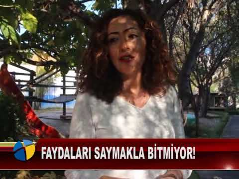 Video FAYDALARI SAYMAKLA BİTMİYOR! download in MP3, 3GP, MP4, WEBM, AVI, FLV January 2017