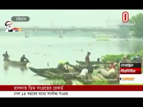 Record collection of fish egg this year from Halda river (28-05-2020) Courtesy: Independent TV