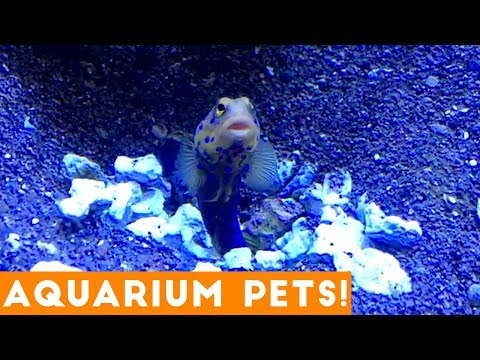 Funny animals - Funny Pets at the Aquarium  Funny Pet Videos