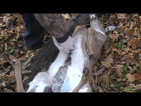 Field Dressing Large Game – Deer