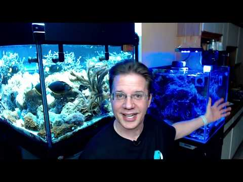 Let's talk about what you NEED to set up a saltwater reef aquarium