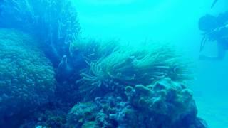 Scuba Diving at Langkawi-Palau Payar Marine Park