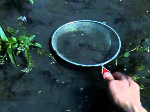 как добыть мотыля для рыбалки летом видео