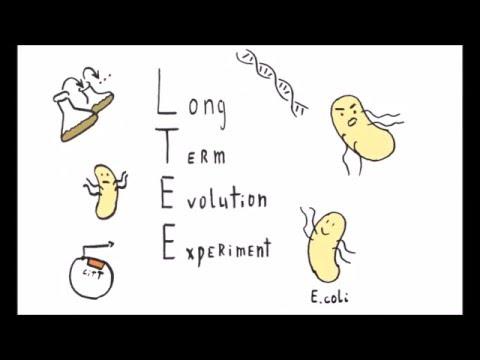 Долговременный эксперимент по эволюции (LTEE)
