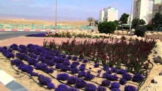 Arad Israel  city photos gallery : Springtime in Arad, Israel