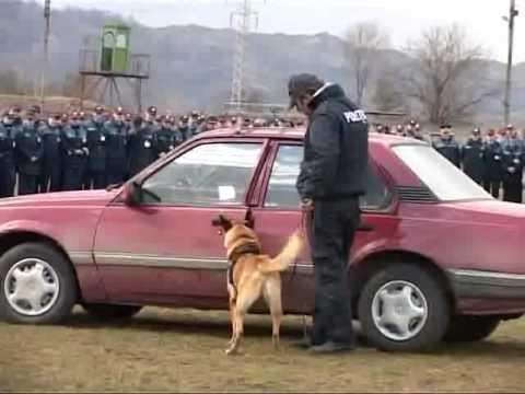 Politistii si cainii politisti