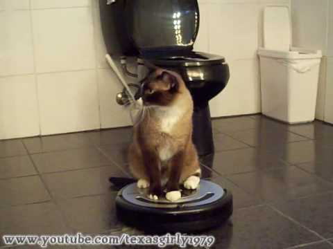 Cleaning Cat uses iRobot Roomba 560 Robotic Vacuum Cleaner.
