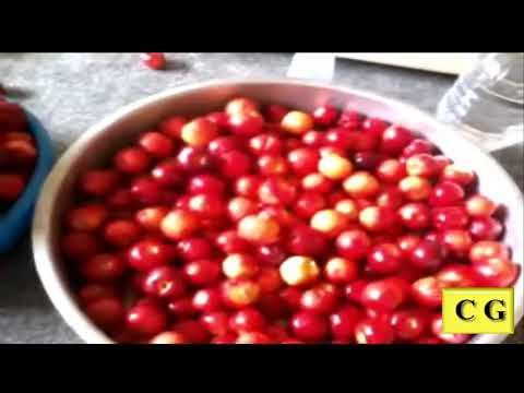 Licor de Acerola - rec 2