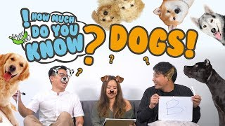 Video How Much Do You Know - Dogs MP3, 3GP, MP4, WEBM, AVI, FLV Oktober 2018