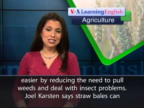 Straw Bale Gardening: Advice for Beginners