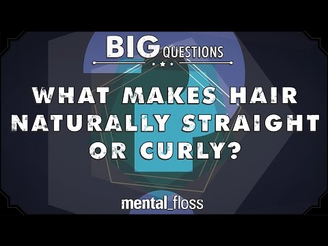 What makes hair naturally straight or curly