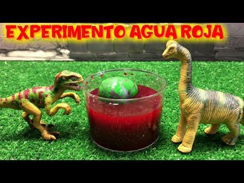 Videos caseros - Experimento casero nacimiento de dinosaurio en agua roja  Vídeos de dinosaurios para niños