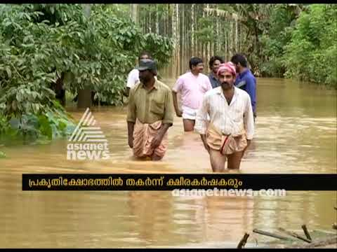 Massive Death Of Cattle In Wayanad : Diary Industry In Crisis