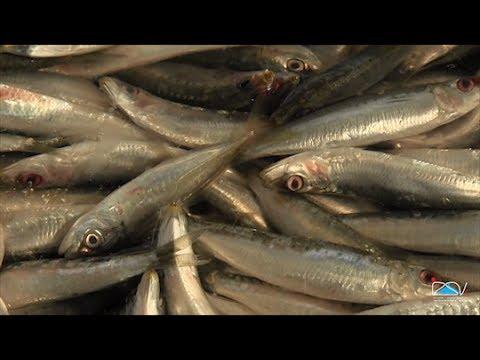 Prodotti della pesca: le parassitosi