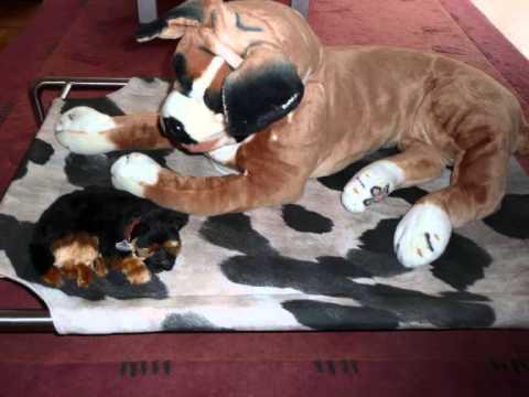 Hundebett, Hundeliege, Hundeschlafplatz