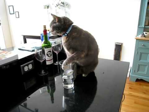 Kitty has a Drinking Problem
