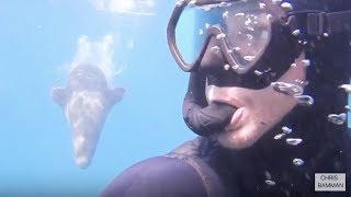 Moruya Australia  city pictures gallery : Diving with seals at south head moruya nsw australia
