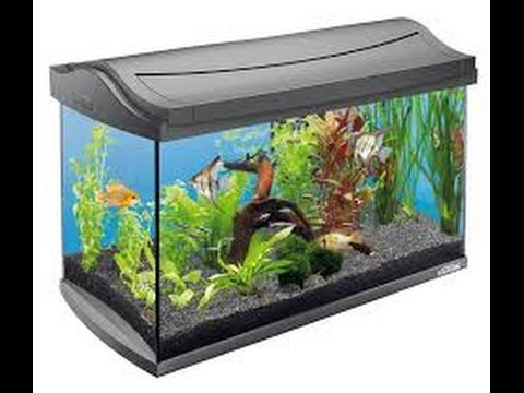 ????????? (aquarium) ?? ??? ??? ????? ?? ???? ?? ????? ????? ???????_Legjobb vide�k: Akv�rium