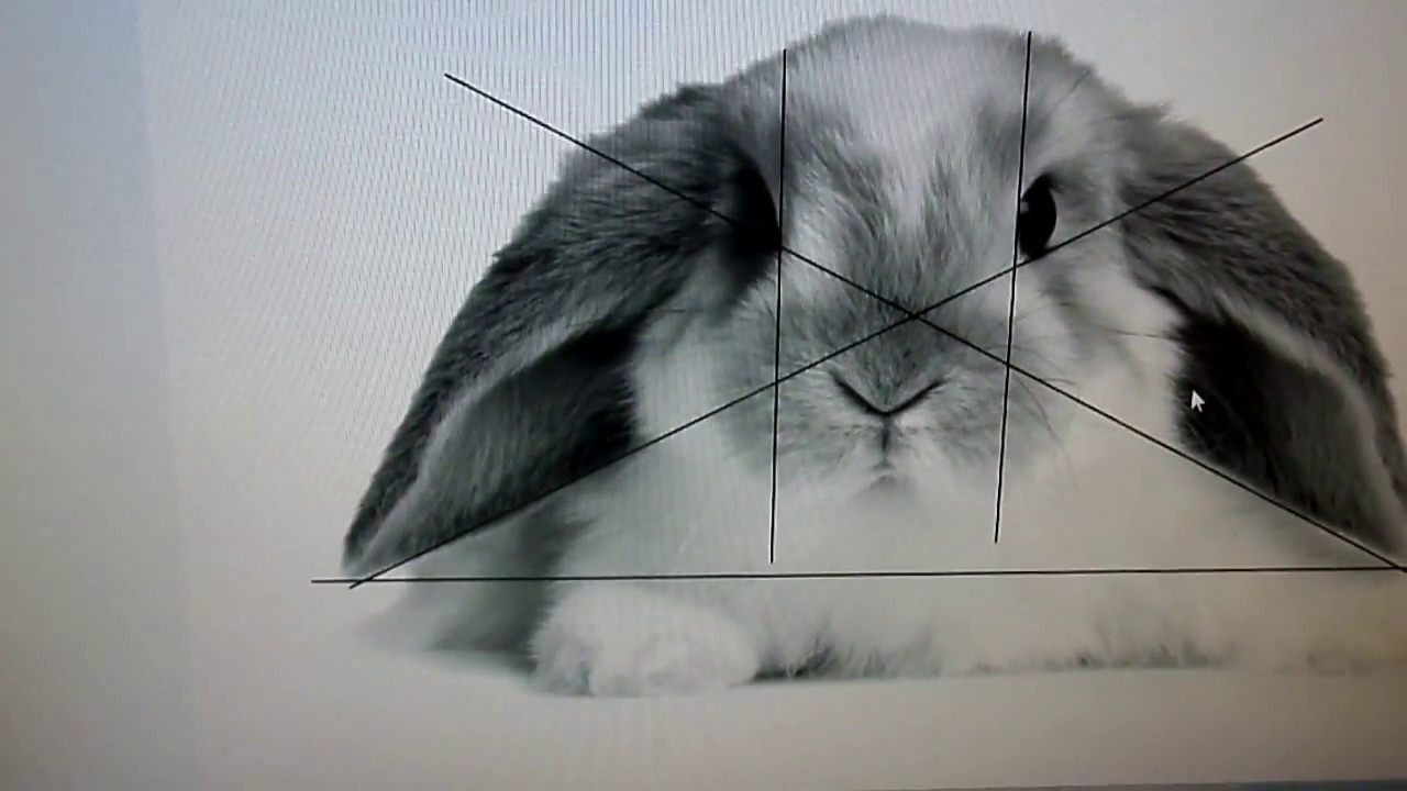 How To Draw Bunny Fur Easy Origami Instructions