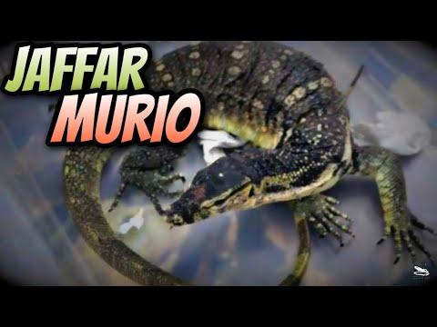 Jaffar Murio