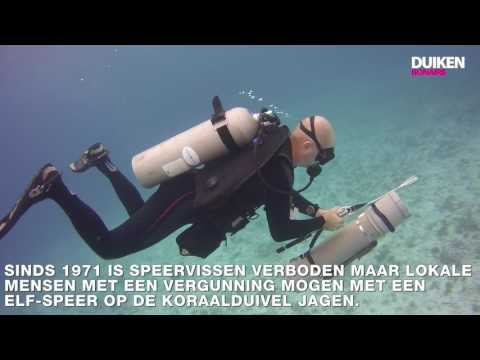 Bonaire vlog#4: koraalduiveljacht